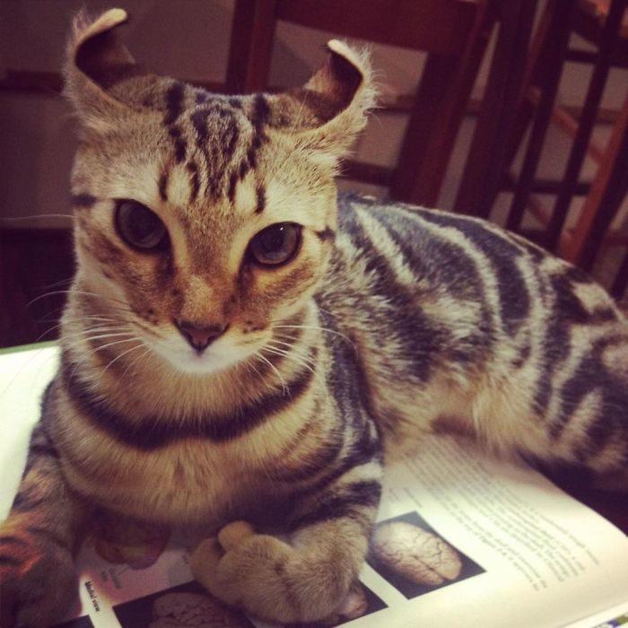 貓狗基因異常