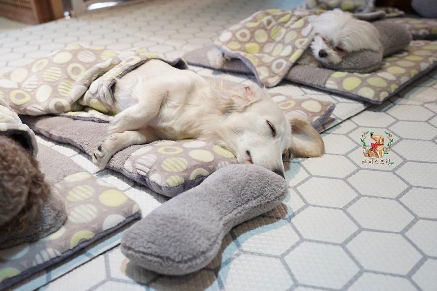 「狗狗托兒所」釋出午睡畫面 一字排開「乖巧睡覺」萌到融化♥