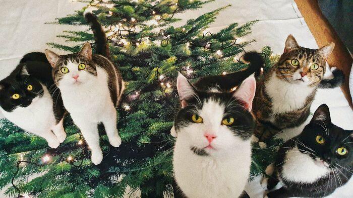 2年前家裡闖進一隻陌生貓 現在被迫成「榮譽貓奴」多了5個主子!