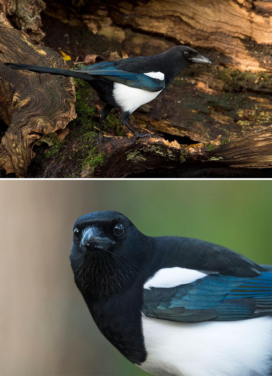 36張告訴你「角度的重要性」的反差鳥照 貓頭鷹側臉VS正臉完勝!