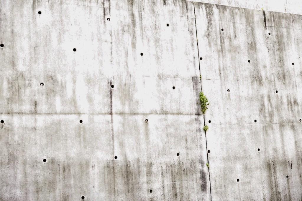 牆上排水洞塞滿了!療癒「毛絨圓球」探出頭 夫妻共住一窩超甜蜜
