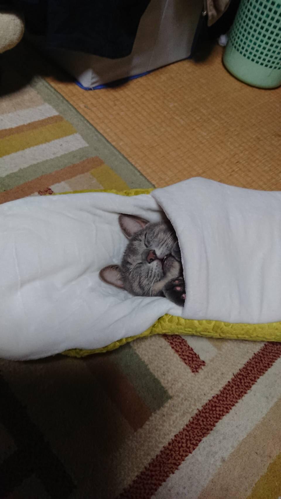 貓貓「被巨蟒吞噬」剩尾巴 奴才「翻過來看」笑翻:表情太幸福~