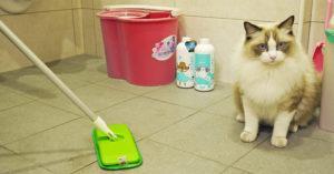 年終大掃除!居家清潔謹記4大招 毛孩健康免煩惱