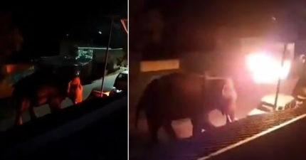 大象誤闖渡假村被狂丟「燃燒布料」 瞬間「整隻成火球」活活燒斃