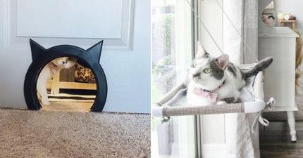 全世界最被「寵壞」貓皇 有自己房間+專屬洞洞