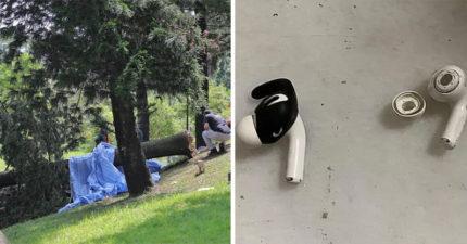 戴「降噪耳機」公園晨跑 女子慘被「20公尺大樹」直接壓斃