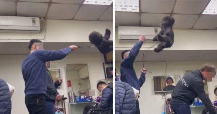 桃園男把狗狗「吊起狂甩空中」 朋友旁邊笑:我可以讓牠起飛