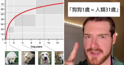 我們以前都算錯!獸醫揭真相「狗狗1歲=人類31歲」:2歲等於49歲