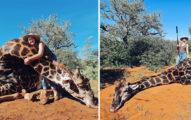人妻情人節收「狩獵長頸鹿」當禮物 挖出「血淋淋心臟」恐怖影片曝光