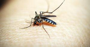 弟離世5年 蚊子飛進車內...他瞬間認出「是弟弟!」網看到淚崩