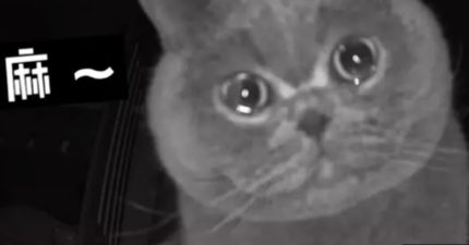 主人過年返鄉遠端偷看 貓皇鏡頭前「想念到哭」:馬麻快點回來QQ