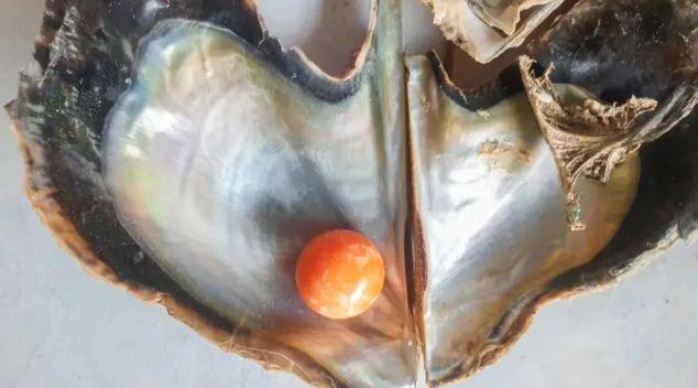 打開牡蠣驚見「橘色小珠子」 中國富豪「急擲千萬」想向漁民買回家
