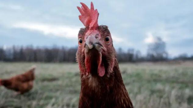 對動物不公平!動保團體籲別再「用動物罵人」 推「5個替代詞」讓你罵個夠