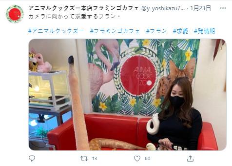 他在動物咖啡廳「被紅鶴激烈求愛」 網興奮大喊:恭喜結婚!