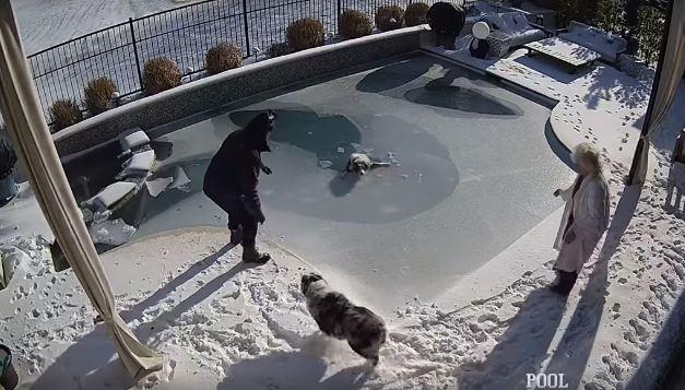 影/狗狗掉「結冰泳池」痛苦掙扎 主人一看「跟著跳下」