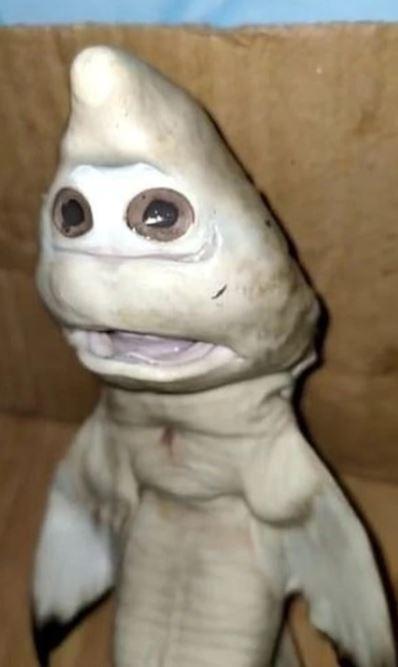 捕魚抓到「驚恐人臉」鯊魚寶!漁民「多少都不賣」認定好運要來了