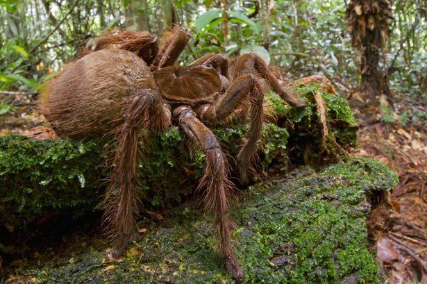 電線桿上驚見「奇怪突起」 近看「懷孕巨蜘蛛」網崩潰:打不贏