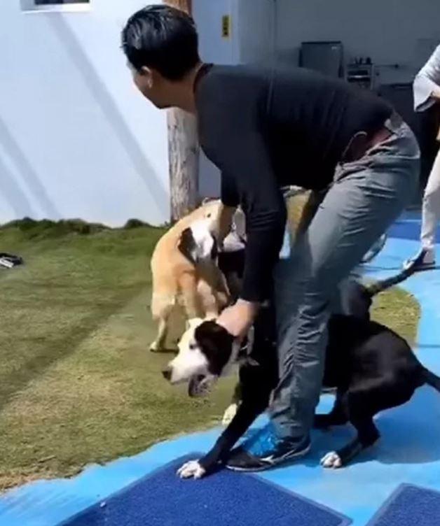 「2比特犬闖民宅」咬傷退役搜救犬 主人崩潰PO「30公分傷口」