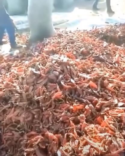 中國醃泡菜太衝擊!「沒穿大叔」黃水池撈菜 影片瘋傳網崩潰:不想吃了