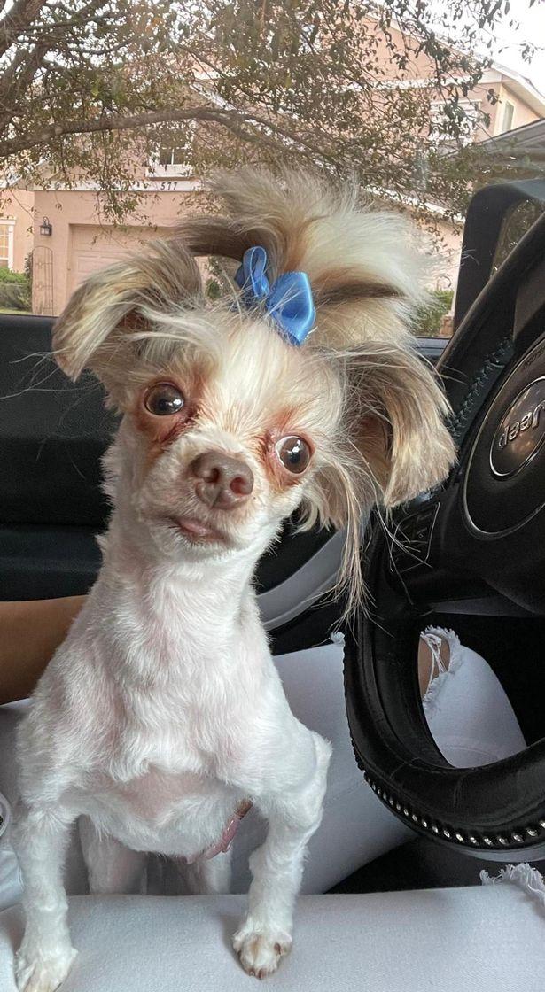 孫帶阿嬤的狗去理髮!剪完慘變《冰原歷險記》「喜德」:阿嬤要生氣了