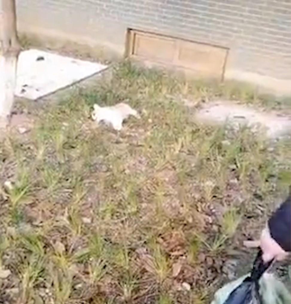 5歲女童「抱寵物狗直墜13樓」 狗在身下「壓成肉餅」網友淚崩:是來報恩的