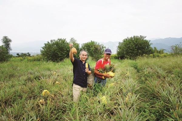 一舉兩得!全民吃鳳梨冰棒 「救果農也創造工作機會」