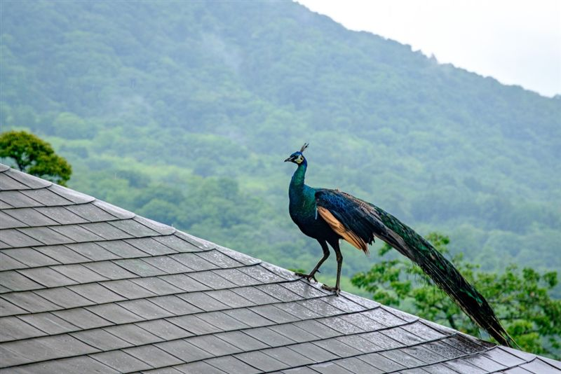 意外捕捉「神鳥飛天」引熱議!真相揭開網驚:是寺廟神獸