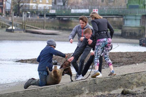 狗咬死海豹