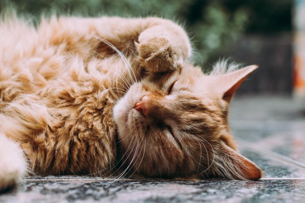 狗有狗味「貓卻沒有貓味」?科學解釋背後原因:不想你聞到