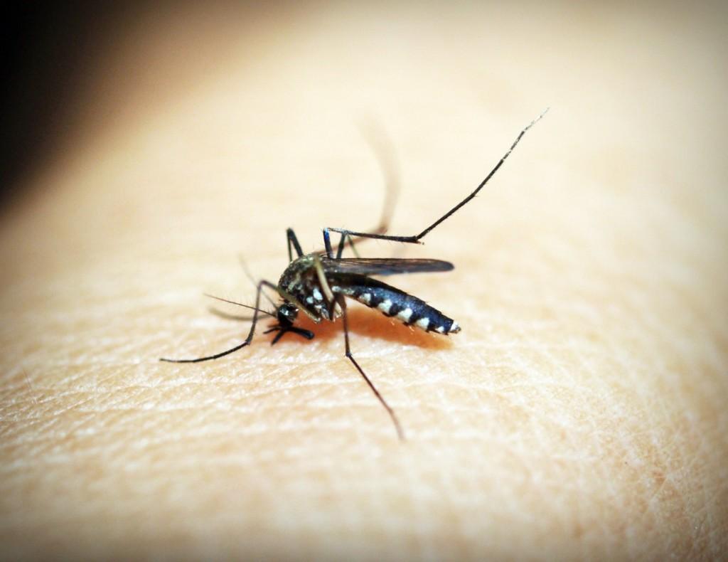 嘉義「蚊子太多」害她慘出車禍!神秘「蚊子龍捲風」民眾驚:以為冒煙