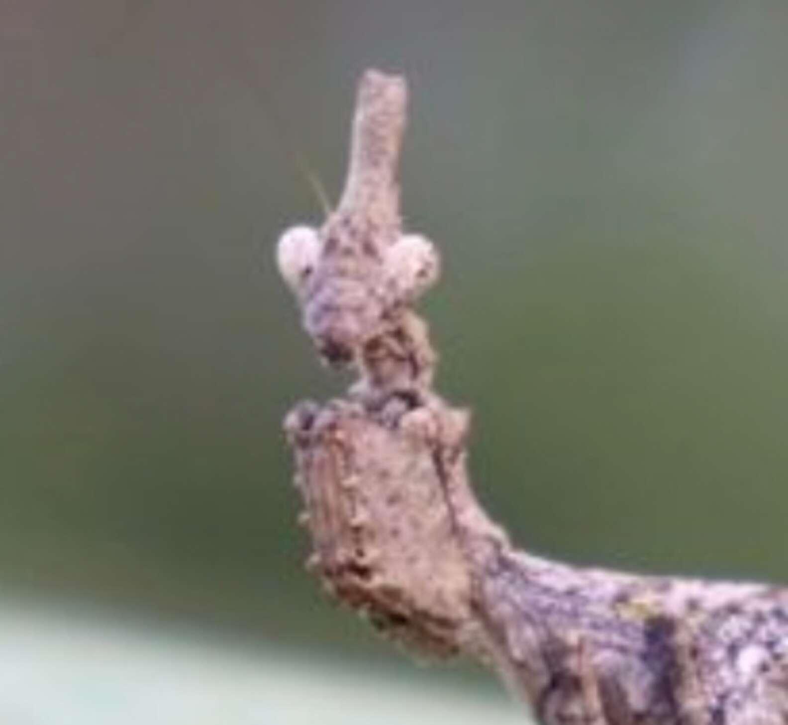 「樹枝長腳」降落公園 轉頭「瞪大眼」一臉震驚:偶被發現了?