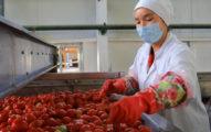 不只新疆棉!日本大廠宣佈停用「新疆番茄」成首例