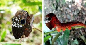最猛保護色!小毛蟲自帶「恐怖骷髏面具」 掠食者一看嚇跑