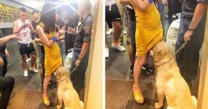 警察臨檢夜店帶警犬 牠突然「一頭埋進裙底吸」辣妹不敢動