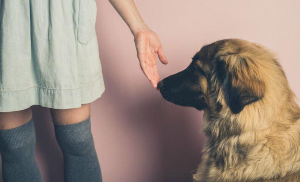 狗狗為何都喜歡聞你「尿尿的地方」?專家解答:被聞也不要罵牠