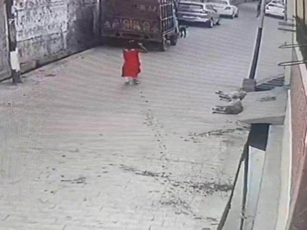 7歲女童走路上...「10隻浪浪」突發瘋撕咬!圍攻拖拉2公尺