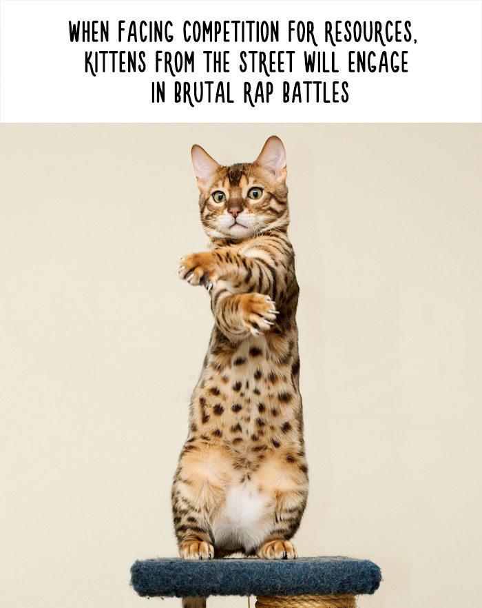 惡搞動物知識