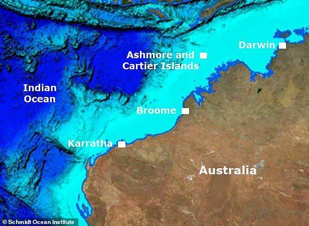 澳洲短鼻海蛇