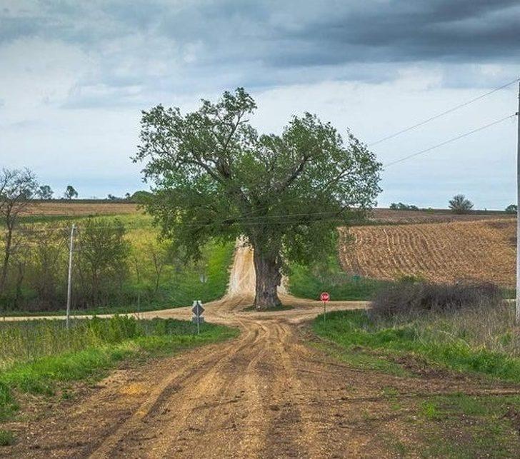 22個「真心尊重地球」的大自然友善設計 「盆栽水龍頭」再也不怕浪費水