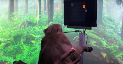 「用意識」就能打電動!馬斯克秀新創「黑科技」:未來用腦滑手機