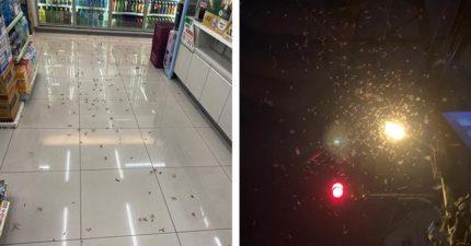 全台各地連續遭「大水蟻入侵」 網友嗨翻:快下雨!