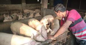 「女醫師嫁豬農」被嗆地位不搭 他嘆:豬農居然娶女醫師「委屈了」