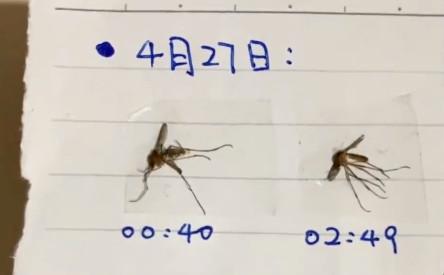 每晚「人蚊激戰3小時」 怨念男製「滅蚊成就日記」興奮:就是它!