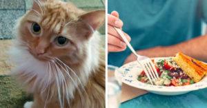 養貓「違背吃素者的原則」 她要求男友:把貓丟了才跟你結婚