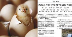 科學奇蹟?中國校長論文聲稱「熟蛋可還原成生雞蛋」:能孵出小雞