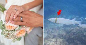 海裡游泳「弄丟婚戒」找不到!5個月後潛水客嚇:有條魚戴著