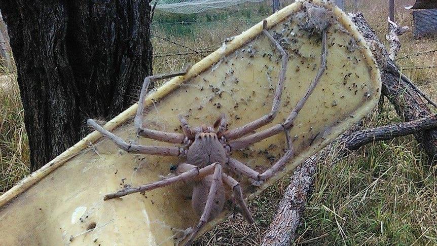 蜘蛛媽「把她家當產房」屋主好興奮 開窗隔天超失望