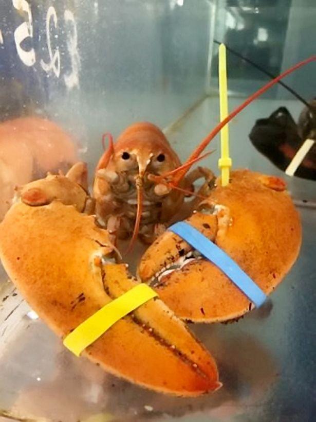 不用被吃了!逛魚市驚見「2隻超稀有龍蝦」 他自豪:說服老闆放了牠們