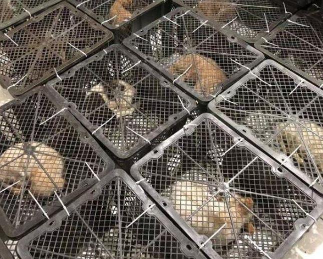 惹眾怒!中國商家賣「活寵物盲盒」掀流行 50元一盒「拆開後才知內容物」