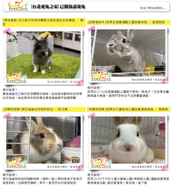 房租暴漲!「台灣愛兔協會」被迫臨時搬家 急PO文求助:搬遷經費仍不夠